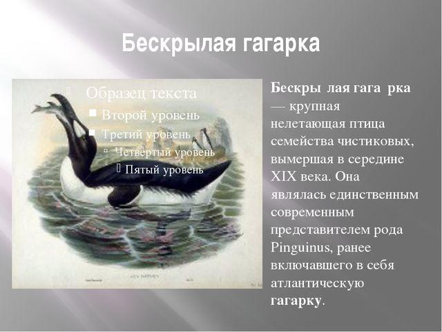 Бескрылая гагарка Бескры́лая гага́рка— крупная нелетающая птица семейства чис...