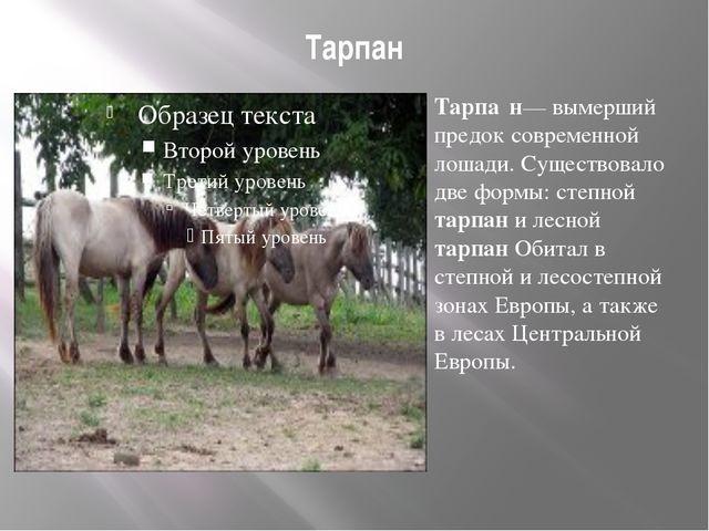 Тарпан Тарпа́н— вымерший предок современной лошади. Существовало две формы: с...