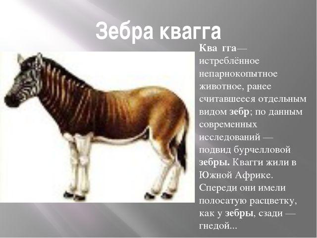 Зебра квагга Ква́гга— истреблённое непарнокопытное животное, ранее считавшеес...