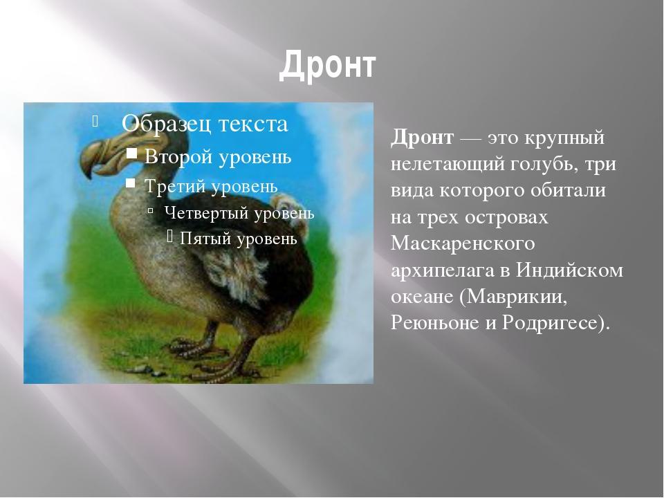 Дронт Дронт — это крупный нелетающий голубь, три вида которого обитали на тре...