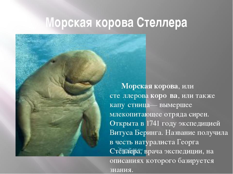 Морская корова Стеллера Морская корова, или сте́ллерова коро́ва, или также к...