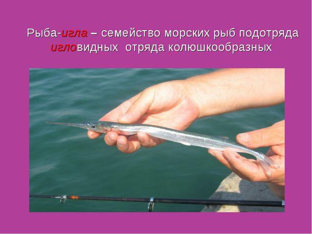 Рыба-игла – семейство морских рыб подотряда игловидных отряда колюшкообразных