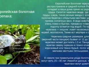Европейская болотная черепаха: Европейская болотная черепаха – широко распрос