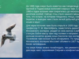 Чайки: До 1995 года озеро было известно как гнездилище самой крупной в Подмос