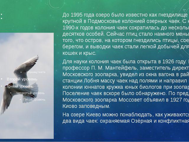 Чайки: До 1995 года озеро было известно как гнездилище самой крупной в Подмос...