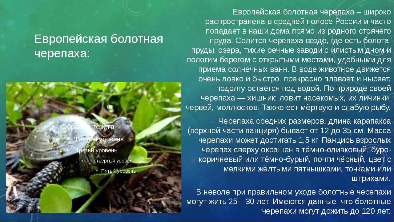 Европейская болотная черепаха: Европейская болотная черепаха – широко распрос...