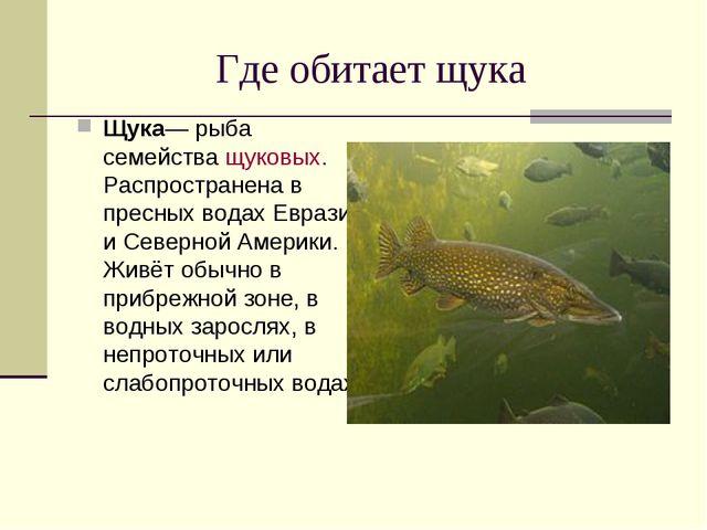 Где обитает щука Щука— рыба семействащуковых. Распространена в пресных водах...