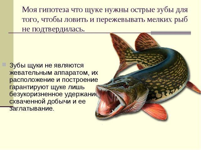 Моя гипотеза что щуке нужны острые зубы для того, чтобы ловить и пережевывать...