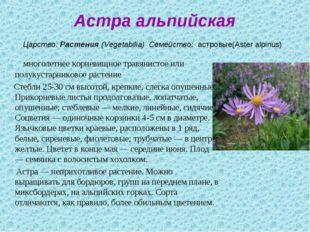 Астра альпийская Царство:Растения(Vegetabilia) Семейство: астровые(Aster