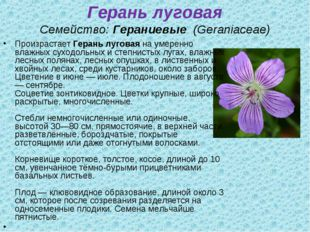 Герань луговая Семейство:Гераниевые (Geraniaceae) ПроизрастаетГерань лугов