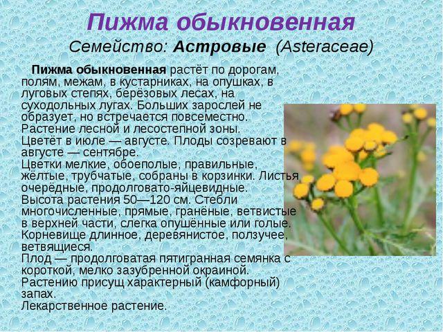 Пижма обыкновенная Семейство:Астровые (Asteraceae) Пижма обыкновеннаярастё...