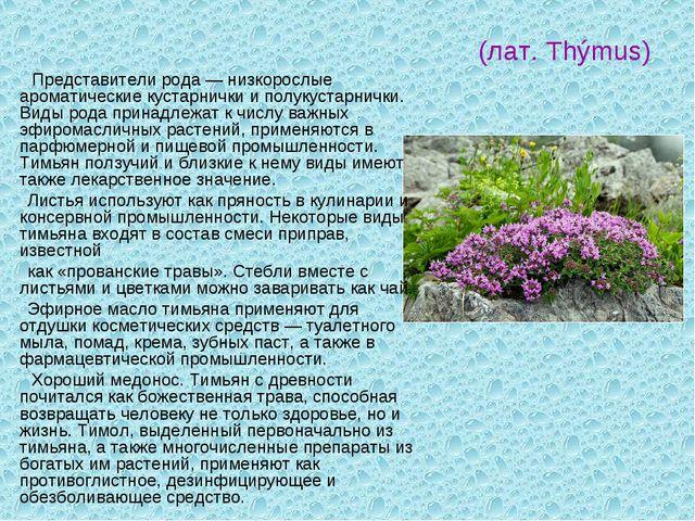 Чабрец (Тимья́н)- (лат. Thýmus) Представители рода — низкорослые ароматически...