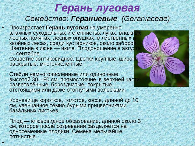Герань луговая Семейство:Гераниевые (Geraniaceae) ПроизрастаетГерань лугов...