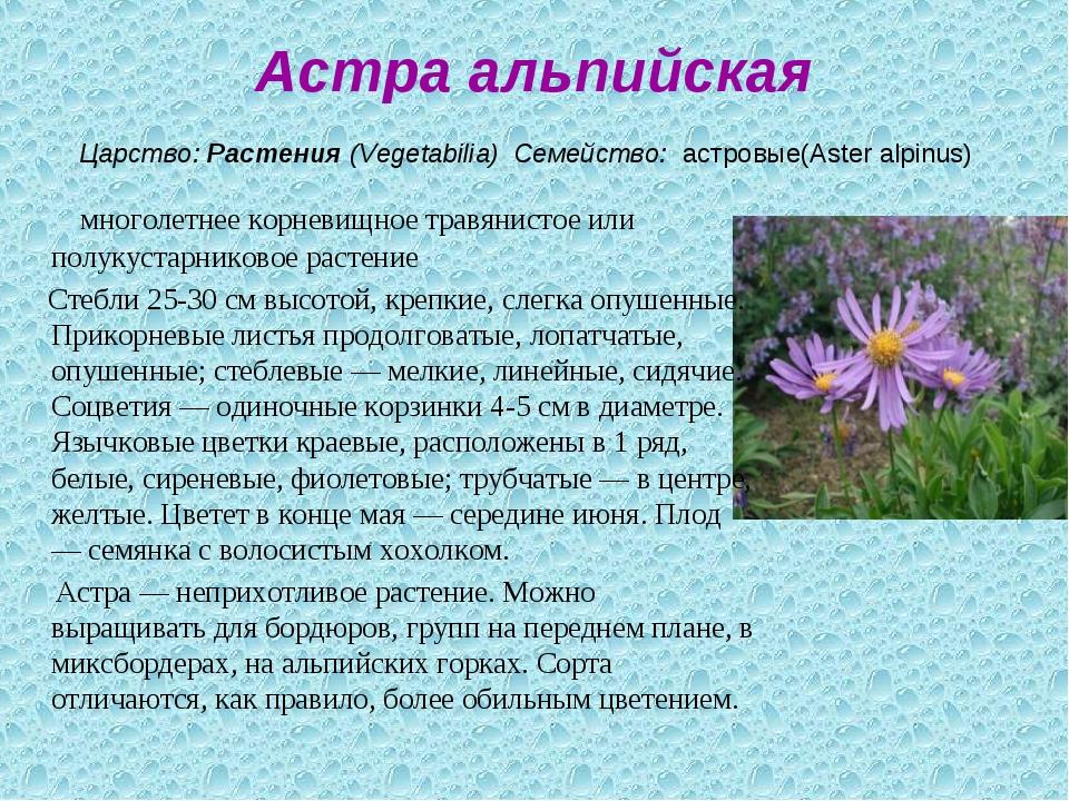 Астра альпийская Царство:Растения(Vegetabilia) Семейство: астровые(Aster...