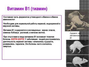 Витамин В1 (тиамин) Составная часть ферментов углеводного обмена и обмена ами