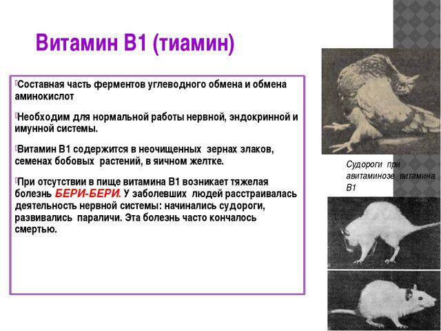 Витамин В1 (тиамин) Составная часть ферментов углеводного обмена и обмена ами...