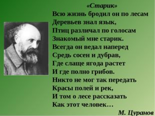 «Старик» Всю жизнь бродил он по лесам Деревьев знал язык, Птиц различал по го