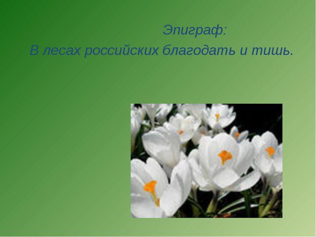 Эпиграф: В лесах российских благодать и тишь.