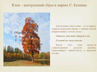 Клен – центральный образ в лирике С. Есенина Для Есенина образ клена – это в