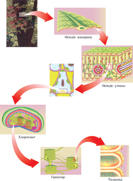 C:\Program Files\Bimash\Biology\html\KARTINKI\059.jpg