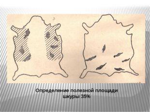Определение полезной площади шкуры 35%