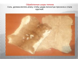 Обработанные шкуры теленка Соль должна впитать влагу, чтобы шкура полностью