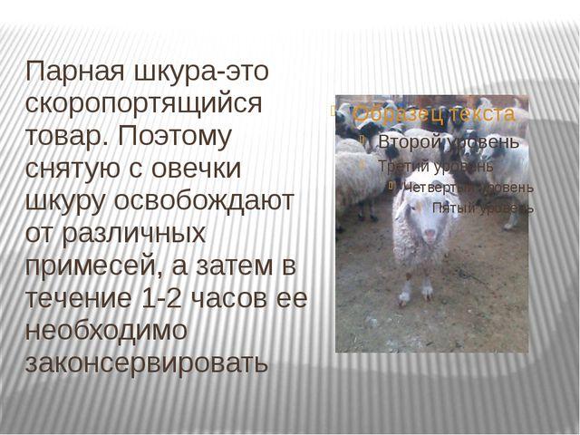Парная шкура-это скоропортящийся товар. Поэтому снятую с овечки шкуру освобож...