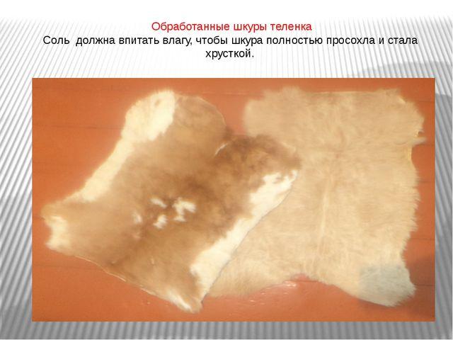 Обработанные шкуры теленка Соль должна впитать влагу, чтобы шкура полностью...