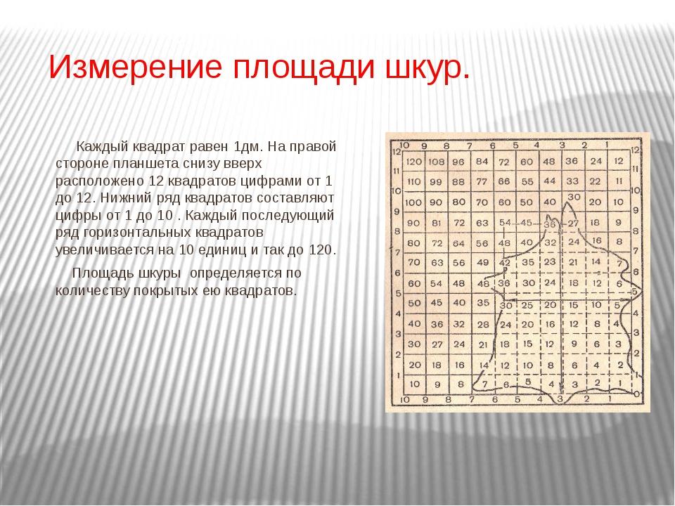 Измерение площади шкур. Каждый квадрат равен 1дм. На правой стороне планшета...