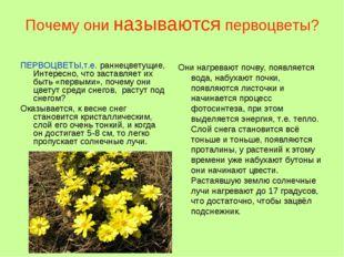 Почему они называются первоцветы? ПЕРВОЦВЕТЫ,т.е. раннецветущие, Интересно, ч
