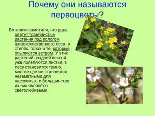 Почему они называются первоцветы? Ботаники заметили, что рано цветут травянис