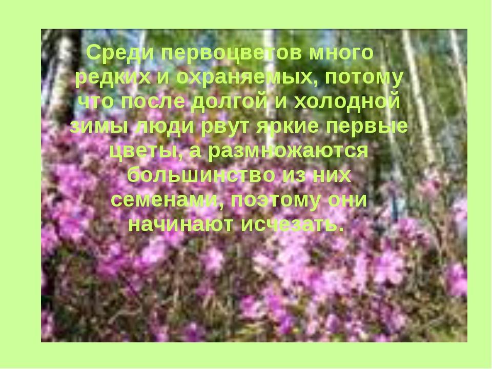 Среди первоцветов много редких и охраняемых, потому что после долгой и холодн...