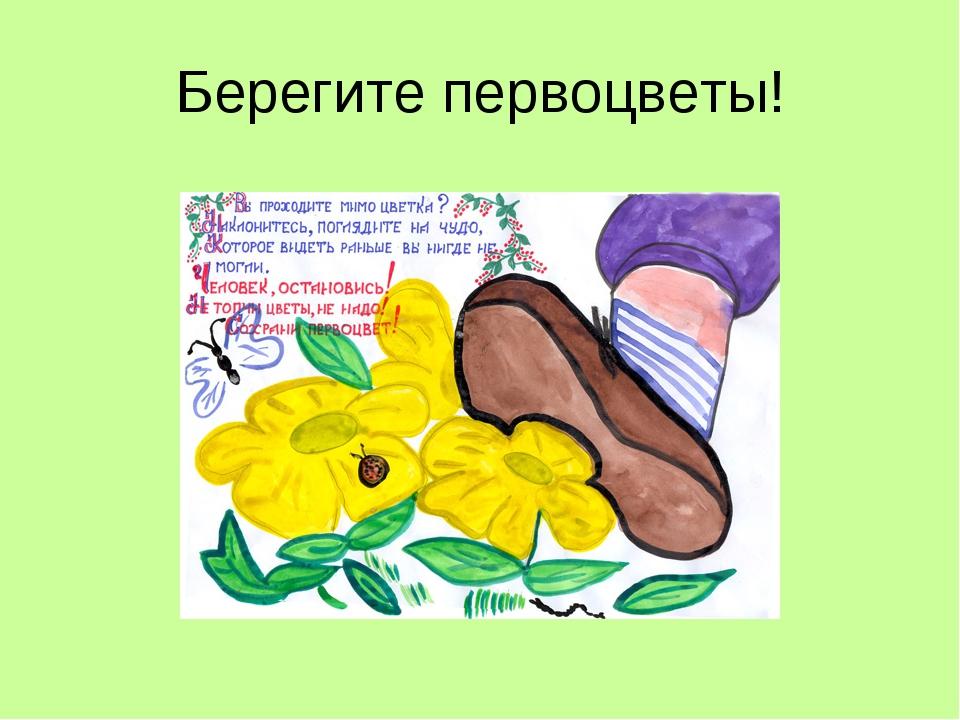 Самодельные, берегите первоцветы картинки
