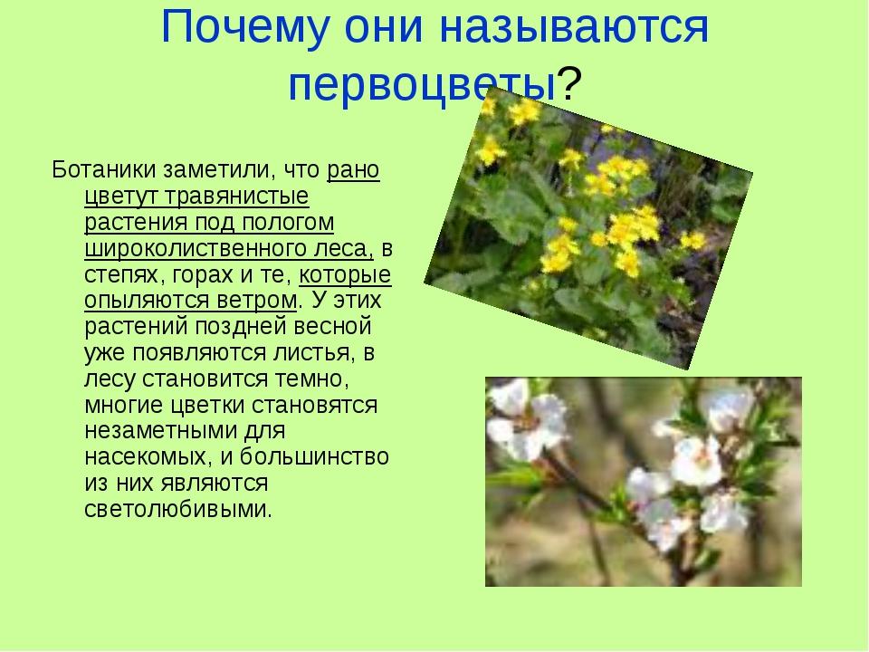 Почему они называются первоцветы? Ботаники заметили, что рано цветут травянис...