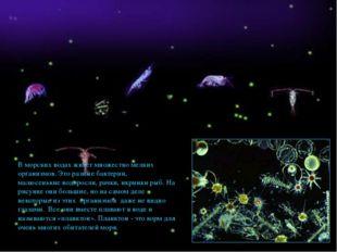 В морских водах живет множество мелких организмов. Это разные бактерии, малюс