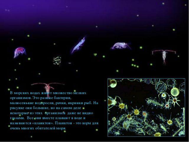 В морских водах живет множество мелких организмов. Это разные бактерии, малюс...