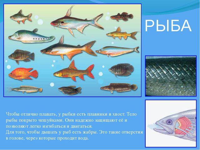 РЫБА Чтобы отлично плавать, у рыбки есть плавники и хвост. Тело рыбы покрыто...