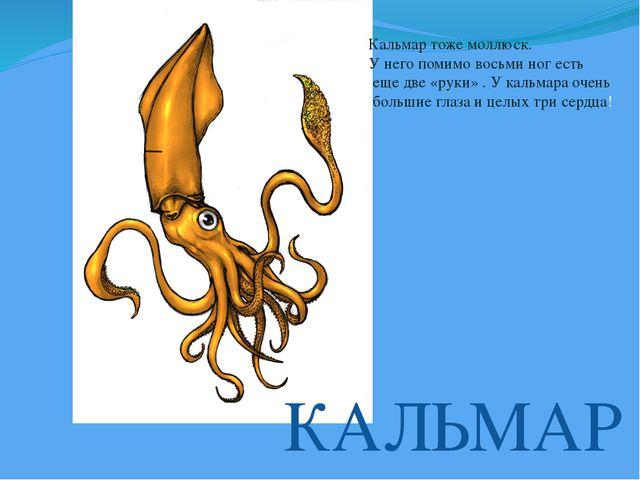 КАЛЬМАР Кальмар тоже моллюск. У него помимо восьми ног есть еще две «руки» ....
