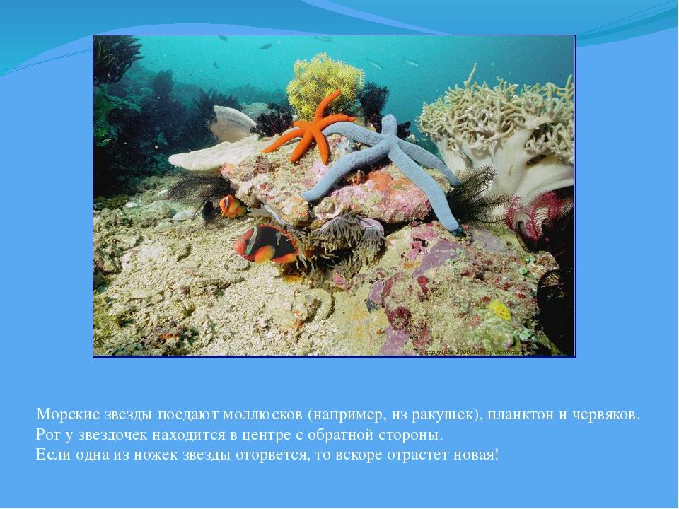 Морские звезды поедают моллюсков (например, из ракушек), планктон и червяков....