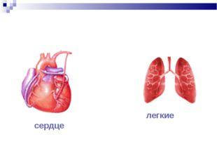 сердце легкие