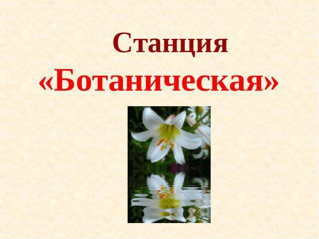 Станция «Ботаническая»