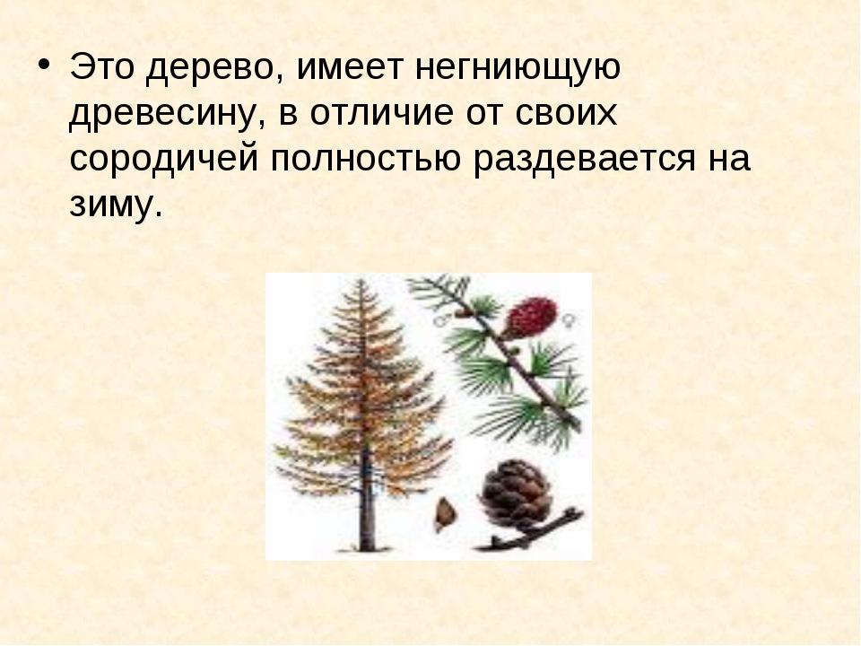 Это дерево, имеет негниющую древесину, в отличие от своих сородичей полностью...