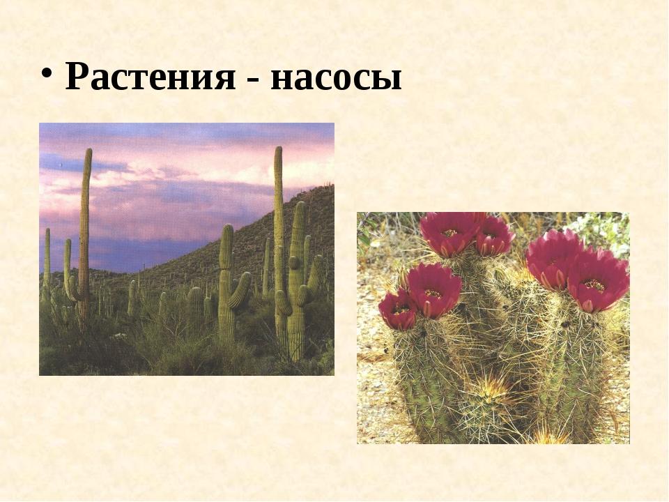 Растения - насосы