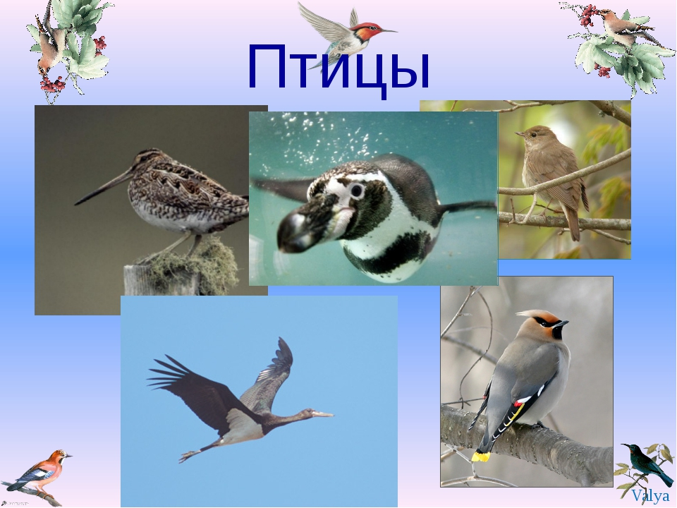 Птицы Valya Valya