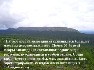 На территории заповедника сохранились большие массивы девственных лесов. Поч