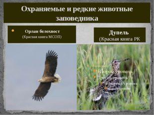 Охраняемые и редкие животные заповедника Орлан белохвост (Красная книга МСОП)