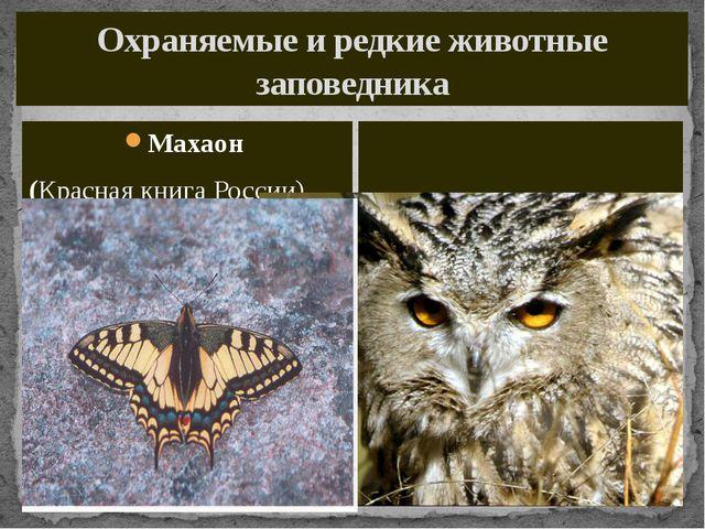 Охраняемые и редкие животные заповедника Махаон (Красная книга России) Филин...