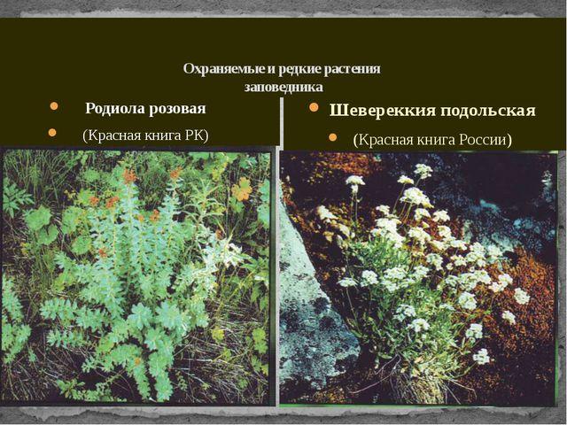 Охраняемые и редкие растения заповедника Родиола розовая (Красная книга РК)...