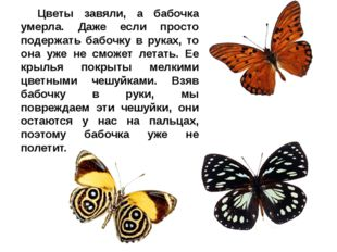 Цветы завяли, а бабочка умерла. Даже если просто подержать бабочку в руках,