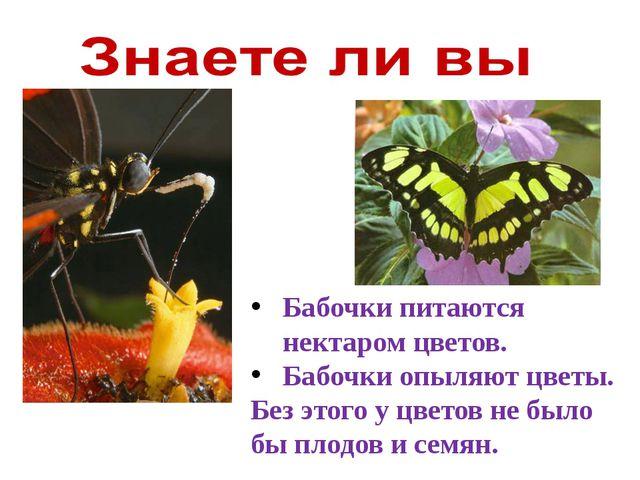 Бабочки питаются нектаром цветов. Бабочки опыляют цветы. Без этого у цветов н...